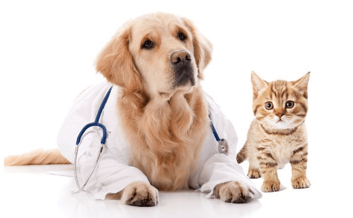 Comprehensive Pet Insurance South Africa