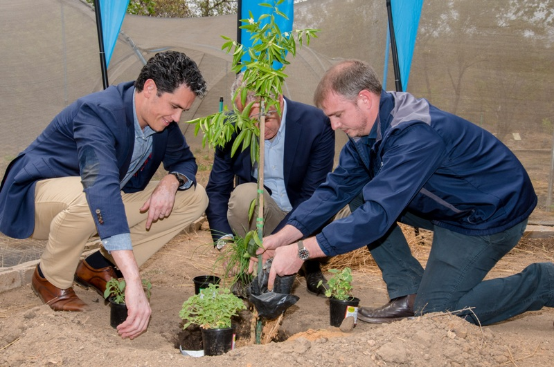 KLM Royal Dutch Airlines Vermeulen and Erik Swelheim Planting A Tree
