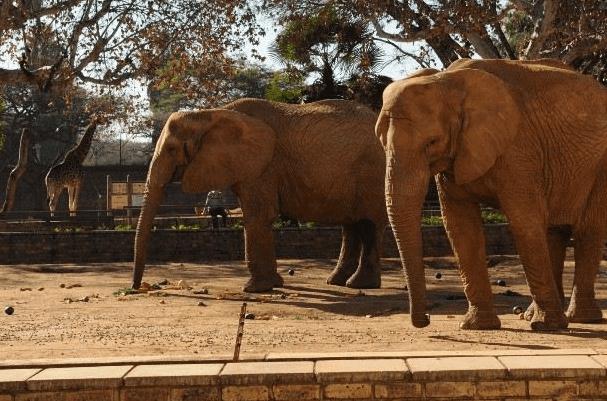 pretoria zoo entrance fee to see elephant
