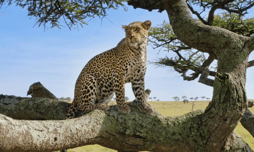 Serengeti Season 2